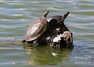 Giuseppe Cristiano - Turtle Rock by Carol Groenen