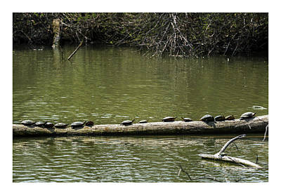 Photograph - Turtle Row by Edward Peterson