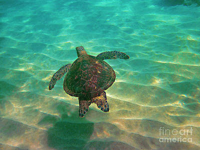 Hawaiian Green Sea Turtle Photograph - Turtle Sailing Over Sand by Bette Phelan