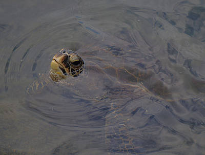 Photograph - Turtle Saying Hello by Pamela Walton