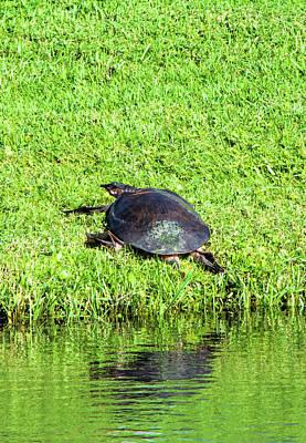 Photograph - Turtle Senses Human by William Tasker