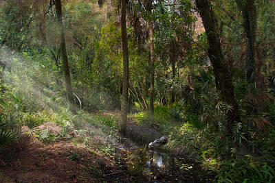 Enchantment Photograph - Turtle Stream by J Darrell Hutto