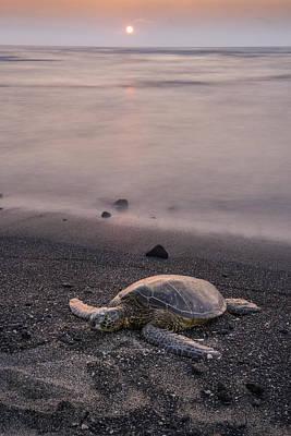 Green Sea Turtle Photograph - Turtle Sunset by Christian Heeb