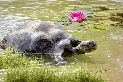 Photograph - Turtle Takes A Swim by Ricky Dean