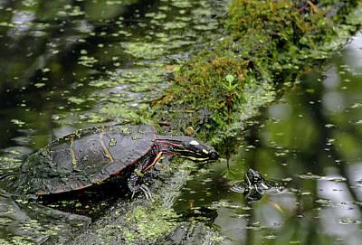 Photograph - Turtle Talk by Bill Jordan