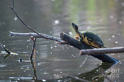 Photograph - Turtle Time by Dale Powell