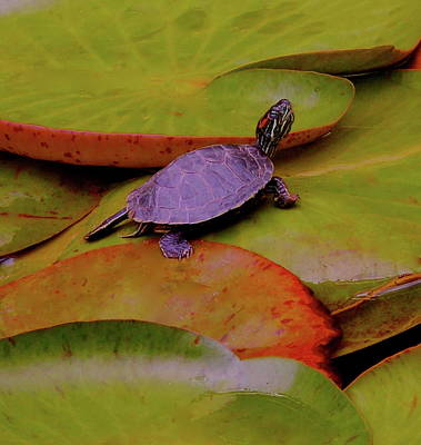 Photograph - Turtle Travels by My Lens and Eye - Judy Mullan -