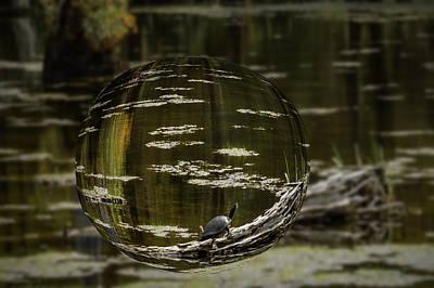 Photograph - Turtle Trunk by Leticia Latocki