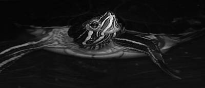 Photograph - Turtle Turtle.... by Tammy Schneider