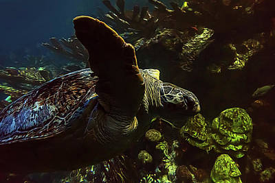 Green Sea Turtle Photograph - Turtle Wave by Janet Fikar