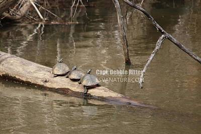Photograph - Turtles 8527 by Captain Debbie Ritter
