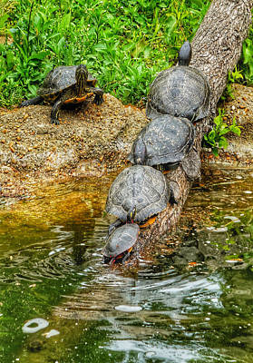 Photograph - Turtles Everywhere by Kathi Isserman