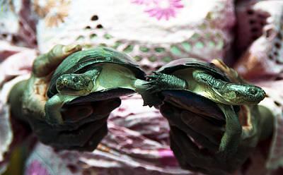 Photograph - Turtles For Sale by Muyiwa OSIFUYE