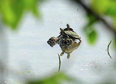 Photograph - Turtles Framed Naturally by Bill Jordan