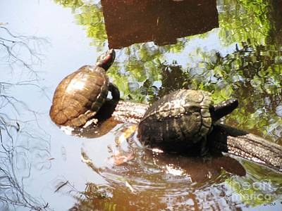 Photograph - Turtles by Julia Stubbe