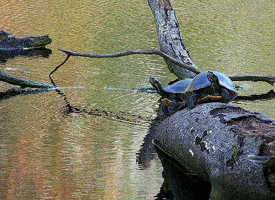 Photograph - Turtles On The Santa Fe by rd Erickson