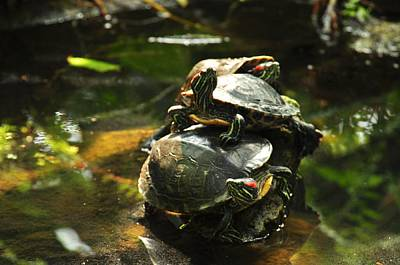 Photograph - Turtles by Puzzles Shum