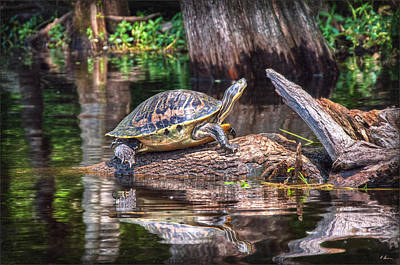 Photograph - Turtle's Sun Bath by Hanny Heim
