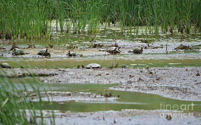 Photograph - Turtles Sunbathing 2 by Ruth Housley