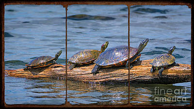 Photograph - Turtles Sunning On A Log Triptych by Priscilla Burgers