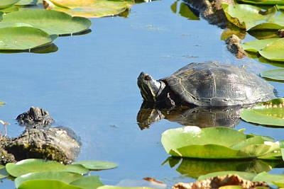 Photograph - Turtling Turtle by Nicki Bennett