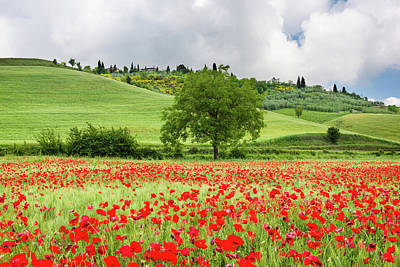 Tuscan Poppies Art Print by Michael Blanchette