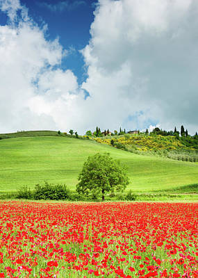 Tuscan Poppies - Vertical Art Print by Michael Blanchette