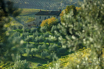 Grapevine Photograph - Tuscan Villa View by Brian Jannsen