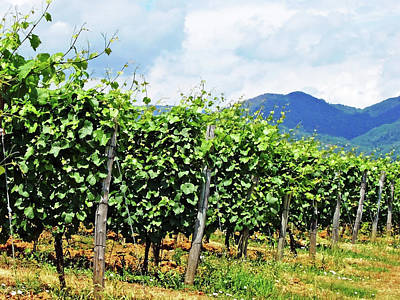 Photograph - Tuscan Vineyard by Debbie Oppermann
