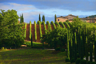 Photograph - Tuscan Vineyard by John Bushnell