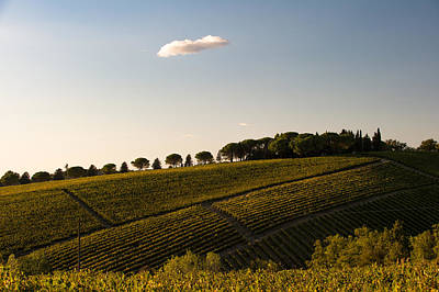 Photograph - Tuscan Vineyard by Wim Slootweg