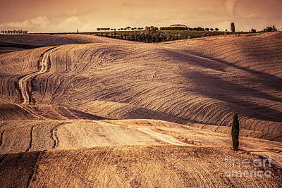 Harvest Photograph - Tuscany Fields Autumn Landscape, Italy. Harvest Season by Michal Bednarek