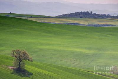 Photograph - Tuscany Landscape by Ana Mireles