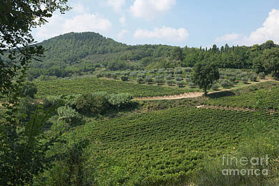 Photograph - Tuscany Vineyard by Loriannah Hespe