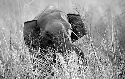 Photograph - Tusker In The Grass by Pravine Chester