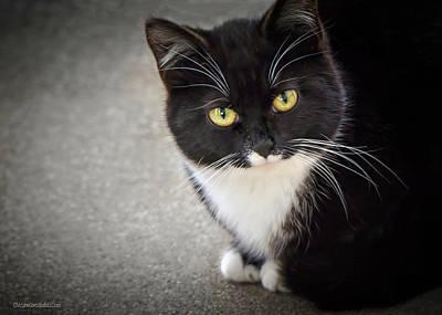 Cat Photograph - Tuxedo Cat by LeeAnn McLaneGoetz McLaneGoetzStudioLLCcom