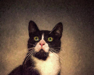 Photograph - Tuxedo Cat Painterly Black And White Pink Nose by Toby McGuire