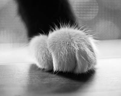 Tuxedo Cat Paw Black And White Art Print