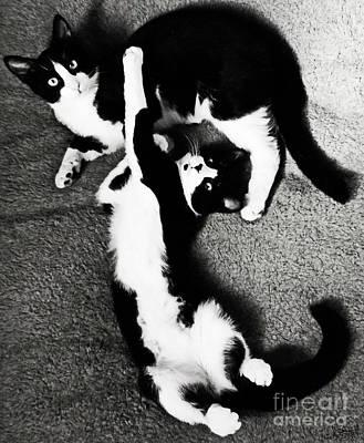 Photograph - Tuxedo Syblings  by Expressionistart studio Priscilla Batzell