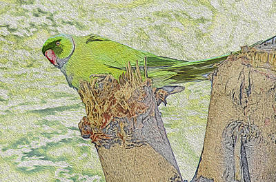 Parakeet Digital Art - Tweet Louder by Manjot Singh Sachdeva