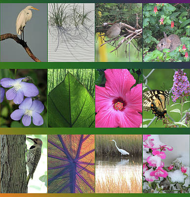 Photograph - Twelve Months Of Nature by Peg Toliver