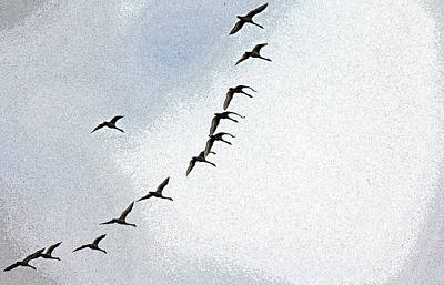 Photograph - Twelve Swans A Flying by Debbie Oppermann