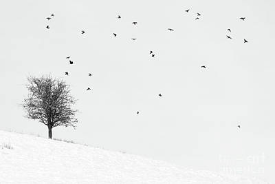 Birds In Snow Wall Art - Photograph - Twenty Seven Birds by Janet Burdon