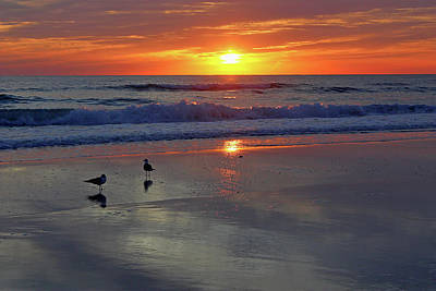 Seagulls Photograph - Twice As Nice by HH Photography of Florida
