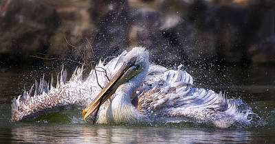 Pelican Wall Art - Photograph - Twig by C.s.tjandra