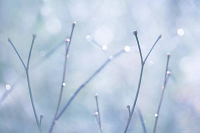 Photograph - Twigs Blue by Jennie Marie Schell