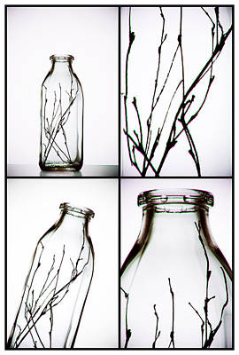 Milk Bottle Photograph - Twigs - Four Panel by Tom Mc Nemar