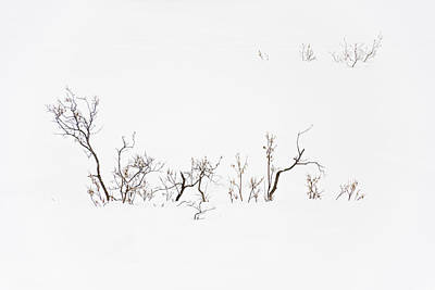 Twigs In Snow Art Print