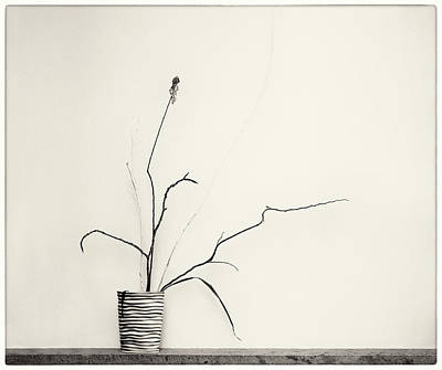 Photograph - Twigs In Vase 2 by Peter V Quenter