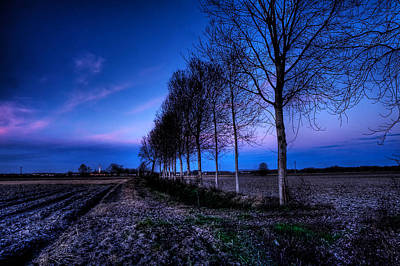 Photograph - Twilight And Trees by Roberto Pagani